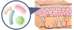 Probiotics and Skin